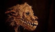 19 жутких скелетов, обнаруженных в подвале, превратились в музейные экспонаты
