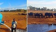 Фермер из Кении каждый день спасает тысячи диких животных