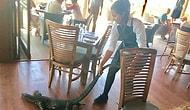 Бесстрашная официантка вытащила варана из ресторана за хвост