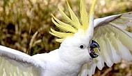 Видео всколыхнувшее общественность: попугай, который умеет лаять