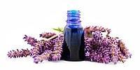 15 полезных свойств лавандового масла