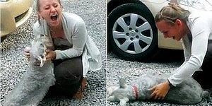 """Dog Faints From """"Overwhelming Joy"""" Of Reuniting With Owner After Two Years!"""