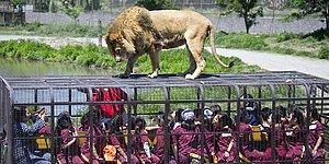 What Zoos Would Look Like In A Perfect World!