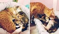 Кот, который не оставлял свою рожающую спутницу ни на минуту