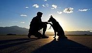 25 фото служебных собак, демонстрирующих истинное значение слова «преданность»