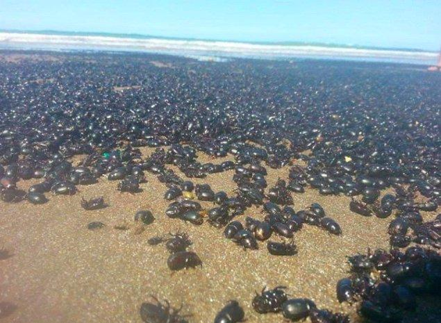 А это ещё хуже! Нашествие тараканов в Аргентине!
