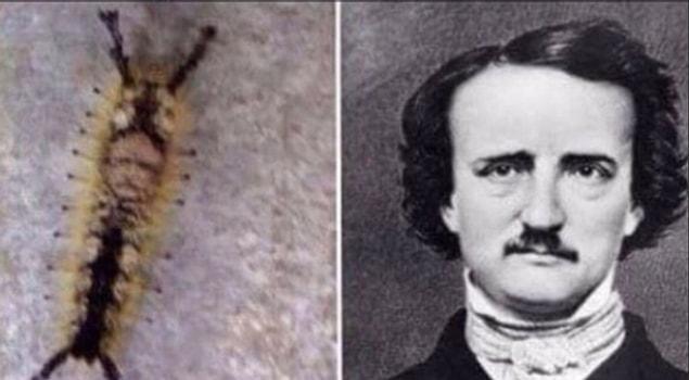По крайней мере это не нашествие тараканов, а просто гусеница, которая выглядит как Эдгар Аллан По.