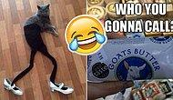 26 Internet Treasures That Are Dumb & Funny At The Same Time!