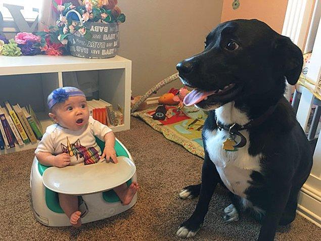 23. Köpek ve bebek... İkisi için de bir ilk...