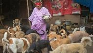 65-летняя женщина из Нью-Дели заботится о 400 собаках, хотя у нее нет денег даже на себя