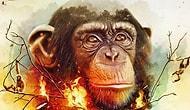 Топ-10 фактов о шимпанзе, накладывающих тень на все человечество