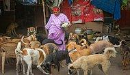 The Heartwarming Story Of A Woman Who Dedicated Herself To 400 Street Dogs In India!