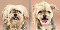 Модное преображение: 20 невероятно умиляющих фото собак до и после стрижки