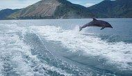 This Gorgeous Slow Motion Video Shows Dolphins Chasing a Boat!