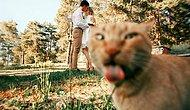 """15 фото, о том как """"фотогенично"""" коты умеют дополнить наши фото"""