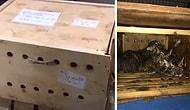 Работники аэропорта были в шоке, когда открыли коробку, пролежавшую у них неделю!