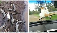 25 фото животных, которым на все начхать