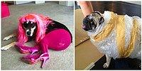 15 фото, о том, почему не стоит оставлять своих домашних животных с другими людьми 😂
