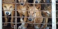 На Тайване запретят забой собак и кошек для употребления в пищу