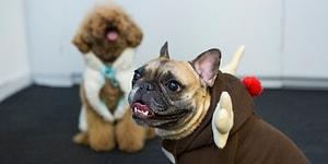 Моднее, чем хозяйка: 10 животных, которые следят за модой