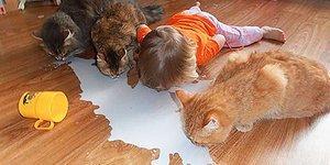20 фото о том, что бывает, когда дети остаются наедине с домашними животными