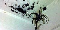 Этот парень хотел убить громадного паука и вот, что из этого вышло...