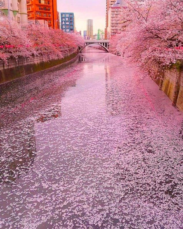 19. Japonya'dan alışılmış bir görüntü.