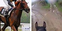 Hilarious Video Shows Why It's Not A Good Idea To Ride A Retired Racehorse!