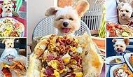 """Раньше этот """"Пёс-гурман"""" был обычной бездомной собачкой, а теперь посещает лучшие рестораны Лос-Анджелеса!"""