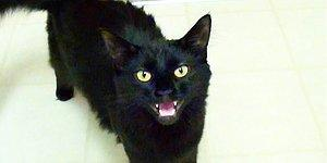 History Of A Nonsense: Why Do We Think Black Cats Bring Bad Luck?
