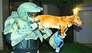 Взрывательные собаки, кошки-шпионки и еще 11 странных оружий, в существование которых сложно поверить
