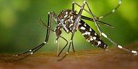 7 удивительных причин, по которым комары кусают вас чаще