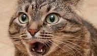 """11 впечатлительных котов, которые явно заслуживают """"Оскар"""""""
