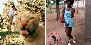 29 Cats Hilariously Photobombing Purrfect Shots Of Humans!