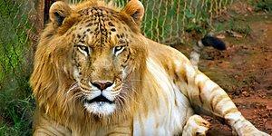 Вы не поверите, что эти 16 гибридов животных существуют!
