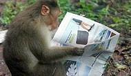 17 уморительных фотографий, сделанных в зоопарке, которые заставят вас плакать от смеха