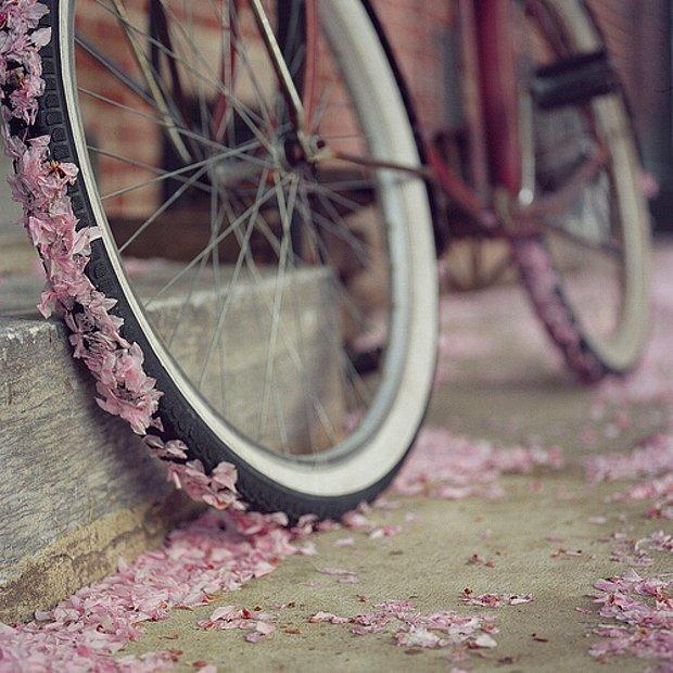 Tatlış bir Bisiklet