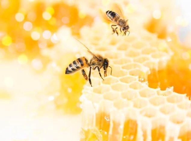 10. Eğer arılara yaptıkları iş için minimum maaş verilseydi bile, bir kavanoz bal 182.000 dolara mal olacaktı.