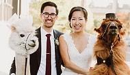 Ненавидите людей? Пригласите на свою свадьбу лам!