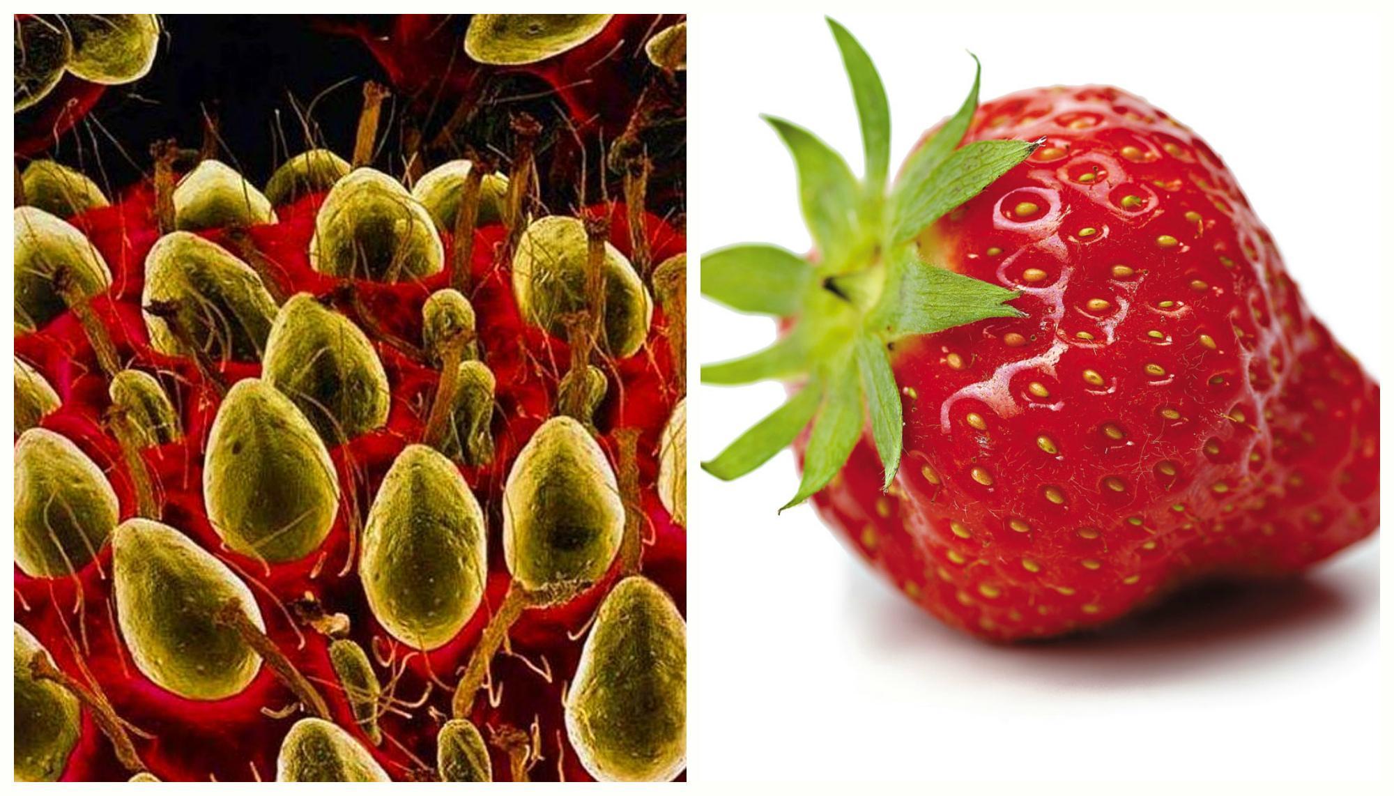 основе фамилии фрукты под микроскопом фото нас одних