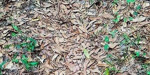 Can You Spot The Snake? This Viral Image Of A Camouflaged Snake Is Driving The Internet Crazy