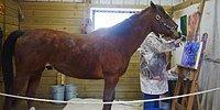 Metro: The Old Race Horse That Saved Its Life By Learning How To Paint