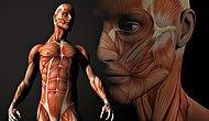 According To Scientists We Will Be Able To Renew Our Body Parts In The Future