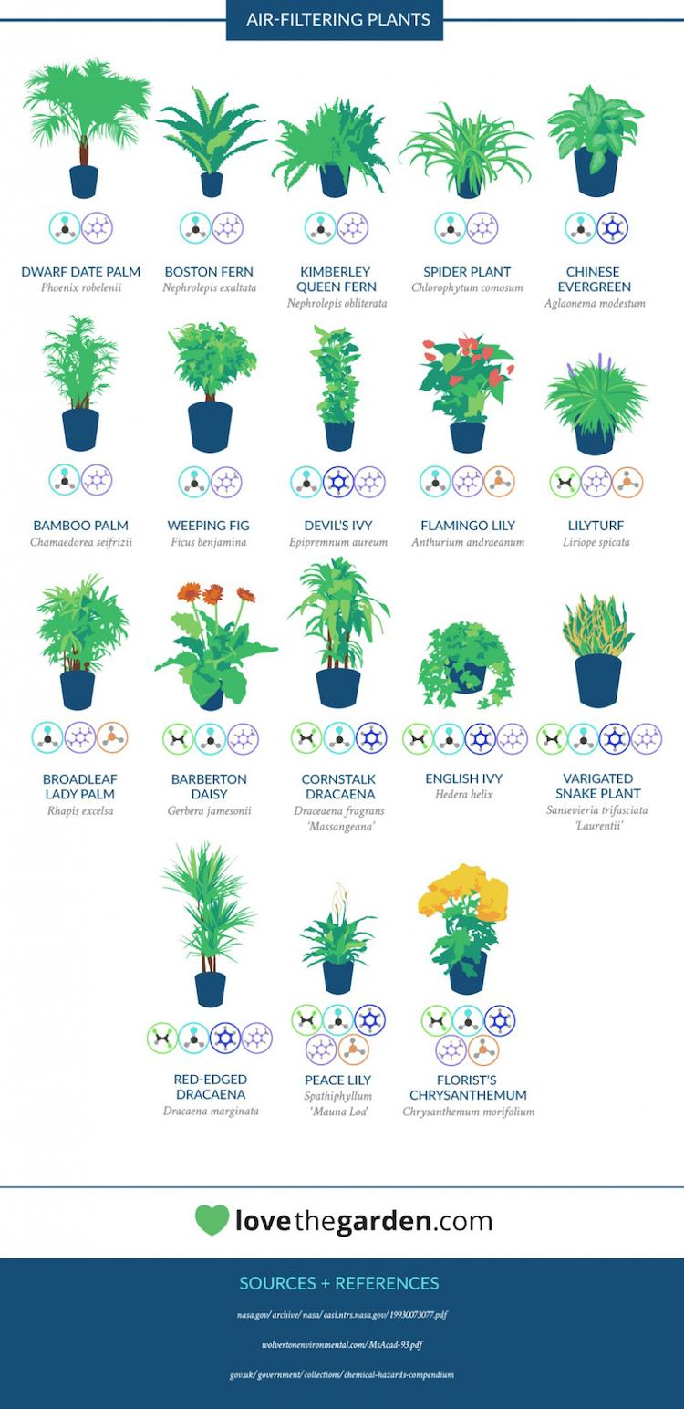 Nasa Gives Us A List Of The Best Air Cleaning Plants For