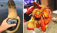 "21 Bizarre-Looking Foods That'll Make You Say ""I'll Just Have A Salad"""
