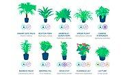NASA Gives Us A List Of The Best Air-Cleaning Plants For Our Home!