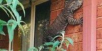 19 примеров того, что австралийские животные зашли слишком далеко