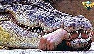 Hunter Becomes The Hunted! Man Gets Eaten By A Crocodile While Hunting Elephants And Lions!
