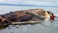 К берегам Индонезии прибило тушу гигантского неизвестного существа