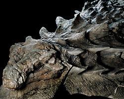Ученые обнаружили огромную мумию динозавра в Канаде